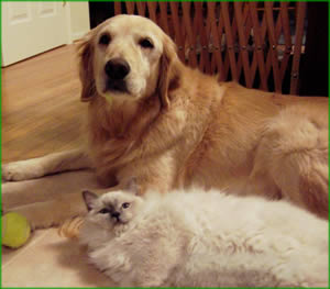 pic dog and cat