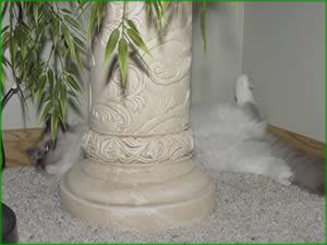 cat behind pillar